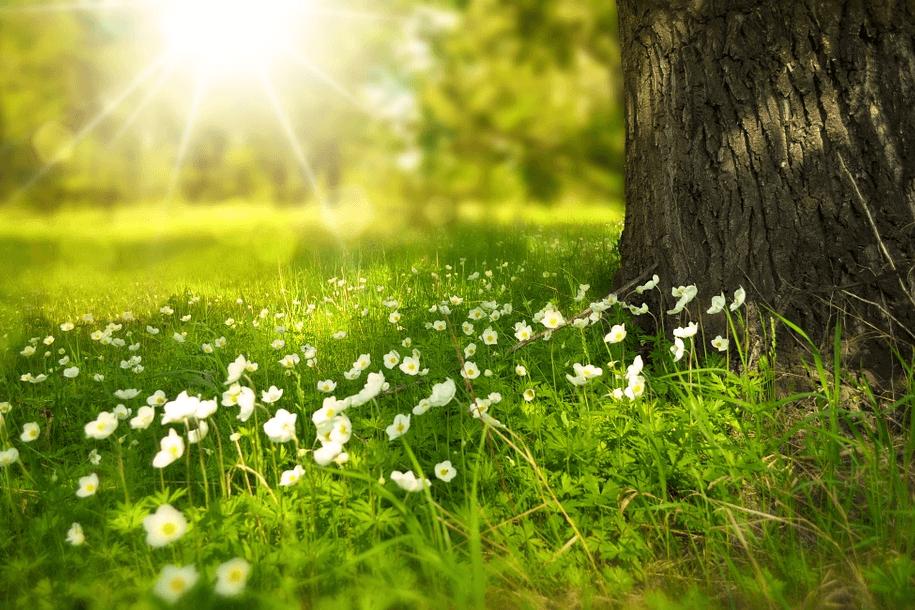 Obrázek čisté přírody